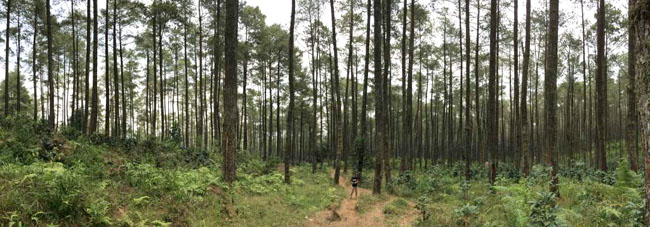 Jaya Giri Forest Adventure in Lembang, West Bandung Regency